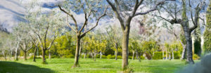 verde-parco-kora-park-resort-spazii-aperti-natura-panorama-montagne-giardino-aranci-macchia-mediterranea